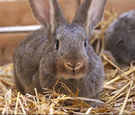 Комбикорм ПЗК-93 для кроликов, универсальный
